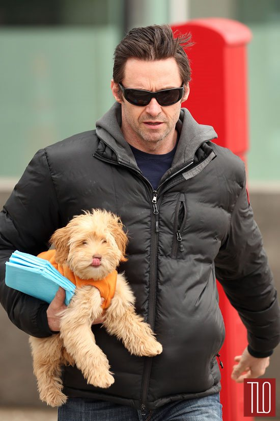 Hugh Jackman With His Dog Allegra In New York Tom Lorenzo
