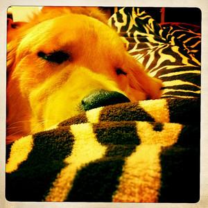 Bark sleepy