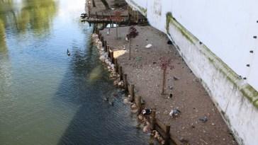 patos rio IMG 1837