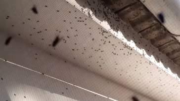 moscas 8