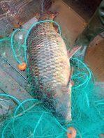 pesca peixe 8127_017444626_o