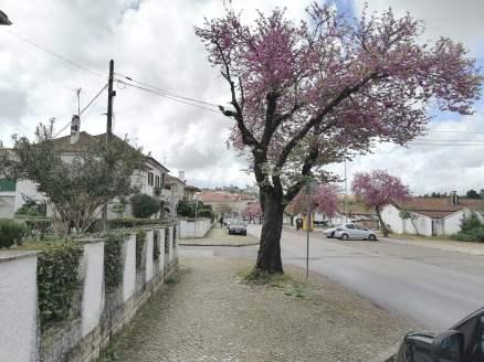 árvore bairro IMG_20210401_131737
