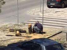 árvore 49394_9191134430524403701_n