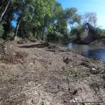 arvores margem rio
