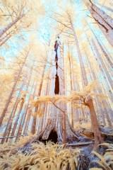 Marble River Cedar Spirit