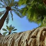 El Palmeral de #Alicante (I)