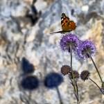 Sombras #mariposa