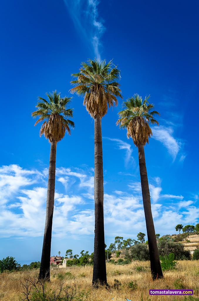 trio-palmeras-preventorio-aguas-busot