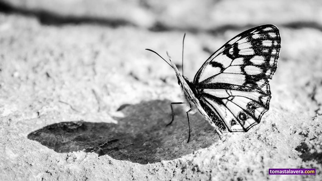 mariposa-2-blanco-negro