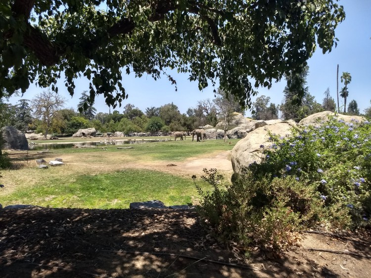 The Africa Plain exhibit at Fresno Chaffee Zoo
