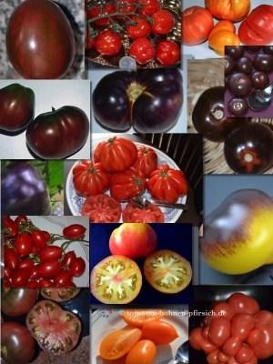105 Tomatensamen 21 Sorten getrennt verpackt