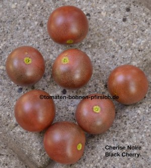Cherise Noire, Black Cherry, süß Tomate