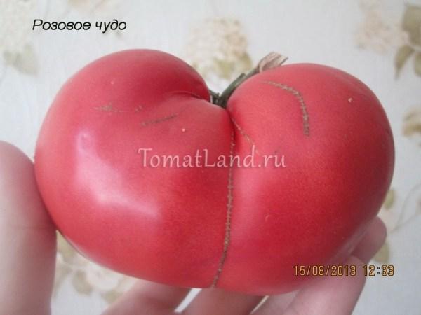 Томат Розовое чудо: описание сорта, отзывы, фото ...