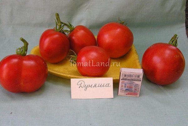 Томат Дуняша: описание сорта, отзывы, фото | tomatland.ru