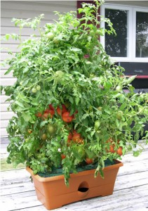 garden patch self watering tomato planter