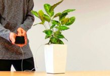 """Can You Charge Your Phone With The Power of A Plant ? With """"Bioo"""", You Can. Tomatoheart.com 1"""
