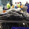 Melbourne wholesale fish market