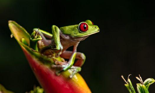 cropped-tfrog.jpg
