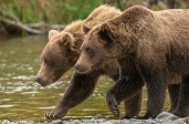 Katmai National Park, Alaska.