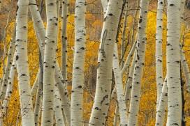 Ridgeway, CO. fall colors.