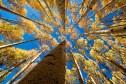 Ouray, Colorado. Fall colors.