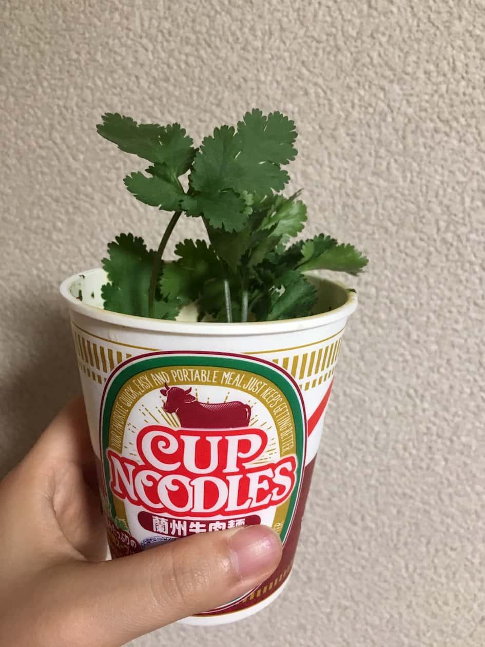 日清カップラーメン蘭州牛肉麺