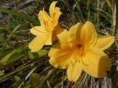 flower-listening