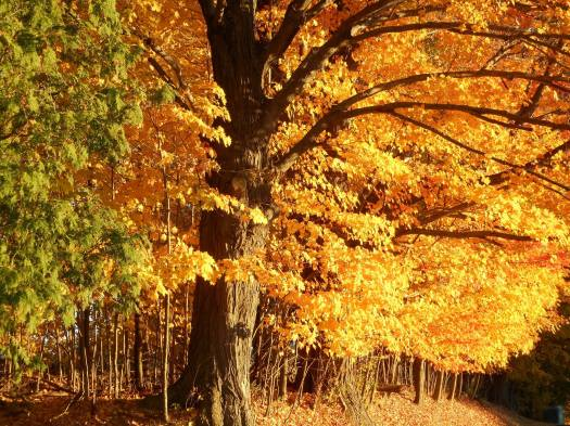 as-we-talk-wind-blowing-leaves-out-of-the-tree