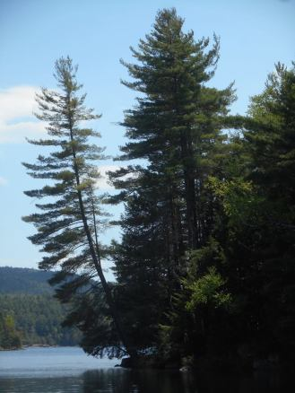 Adirondacks-A tree looking out over the lake...