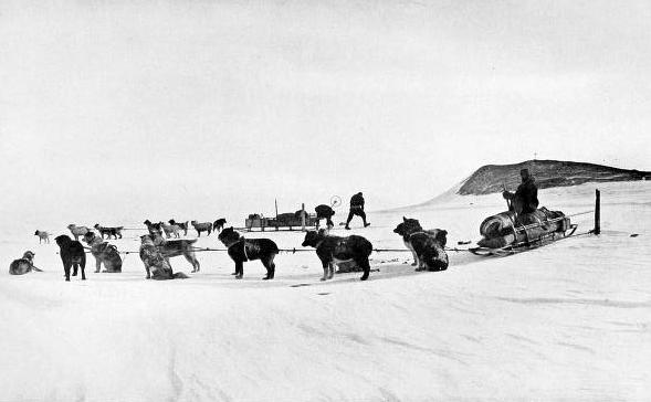 A Dog Team on the Terra Nova Expedition