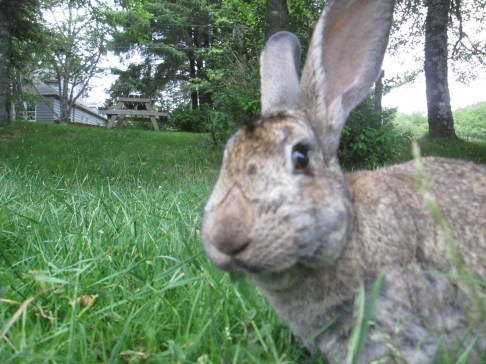 The brave rabbit