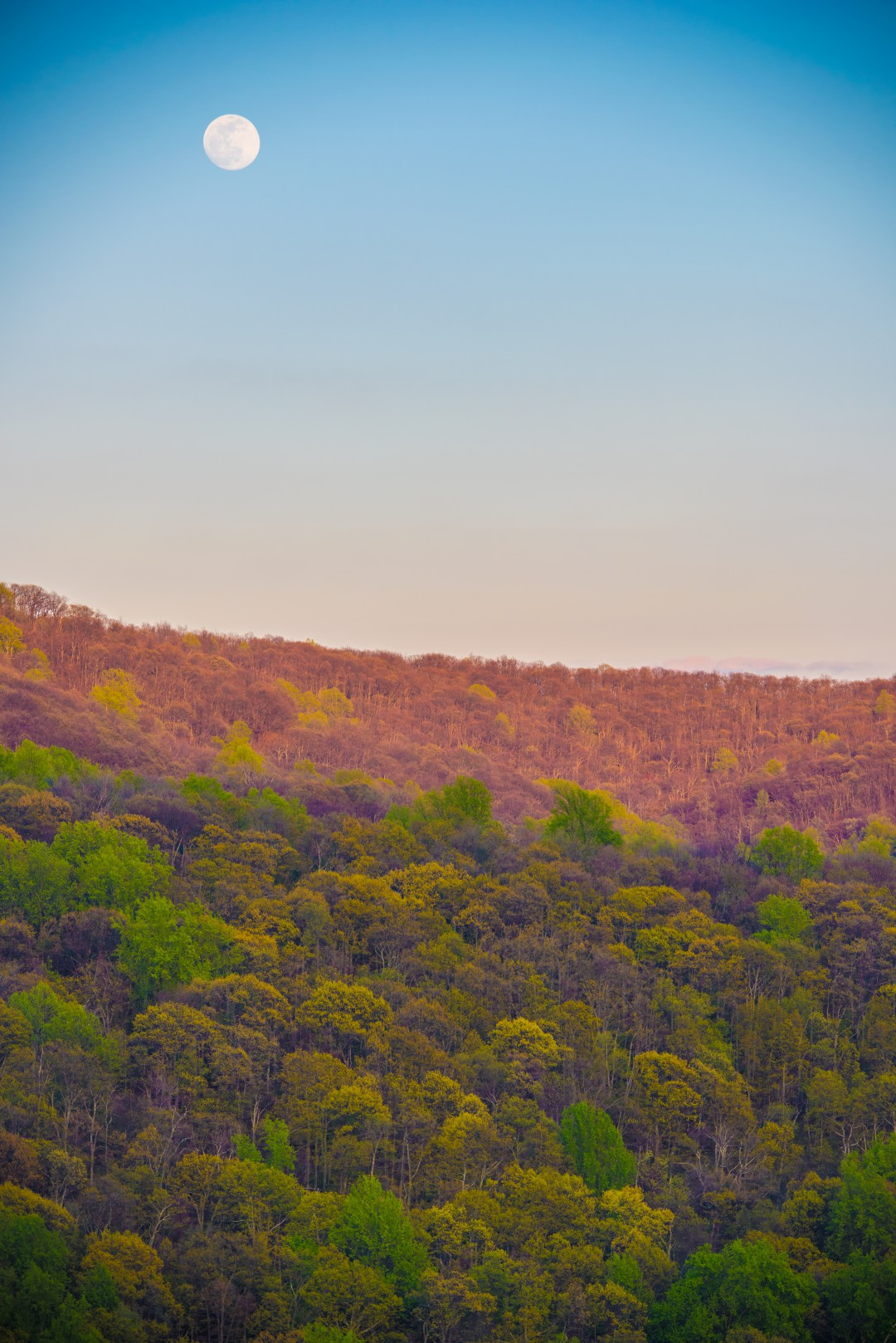 A full moon rises above the Shenandoahs cloaked in the colors of early spring