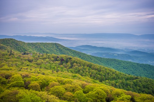 Spring green cloaks the slopes of Stony Man on a misty May morning,