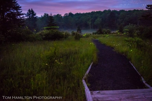 Lightning bugs abounded in the meadow next to the lake