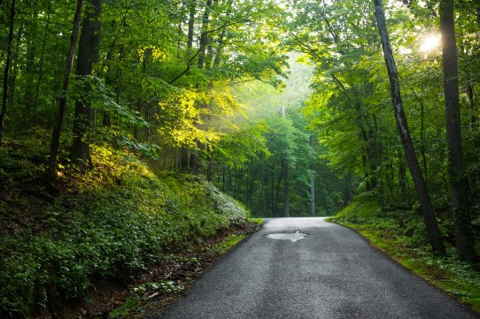One of those moments where you just have to stop the car and take a picture. Late day post storm light pierces through the canopy in the George Washington National Forest