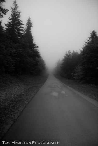 """""""Socked in Road"""" - National Forest Road 104 climbs into the fog bank blanketing Spruce Knob"""
