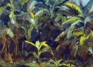 Among bananas