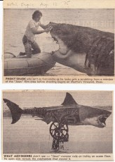 Two of the clippings from my copy of The Jaws Log. I found them in the National Enquirer's August 12, 1975 issue.