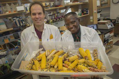 FSU Associate Professor of Biological Science Hank Bass and FAMU Professor of Agronomy Oghenekome Onokpise.