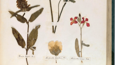 Photo of A Poet's Catalog of Plant Life