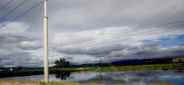 Crane, near Bogota