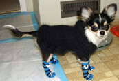 Pet Socks (Dog / Cat) Non Slip