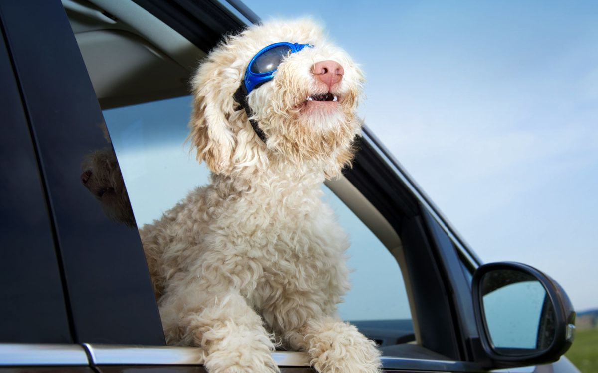 Tierischer Beifahrer Was Wäre WePositive Psychologie Positive Psychologie