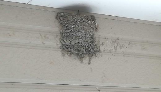ツバメのふん掃除と巣を守る方法!鳥に人気の我が家
