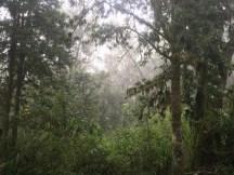初日のジャングル