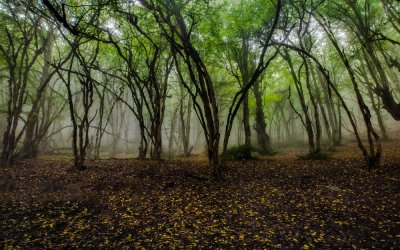 Protecting forests is key to conserve water resources, says expert