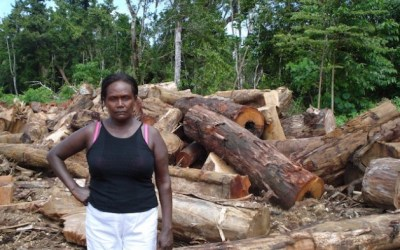 China leads illegal logging in Solomon Islands..new report shows
