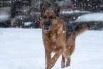 Otello snow