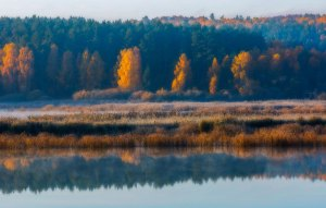 Marsh with golden trees