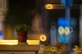 Cactus on night street, waiting for new home. I took it with me after the shot :)